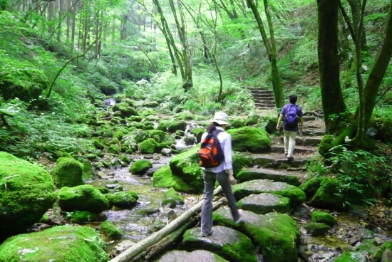 Discover the Green, Serene and Active City Tokyo